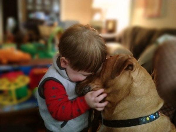 Thú cưng là con vật rất thân thiết đối với bé hãy dạy bé cách chăm sóc chúng