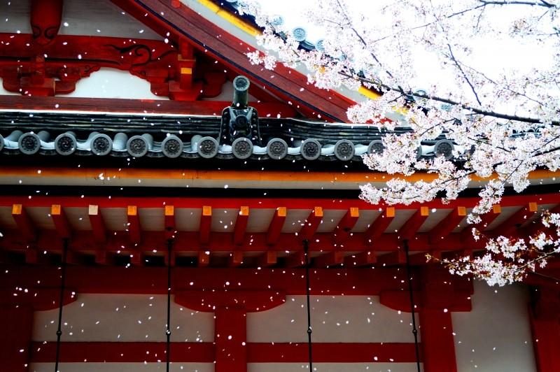 Hoa anh đào thể hiện vẻ đẹp thanh cao, thuần khiết nhưng cũng hùng hồn, tượng trưng cho tính cách của người Nhật Bản