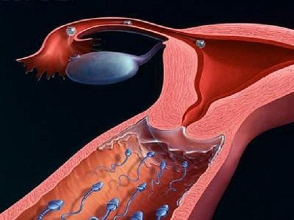 Hình ảnh tinh trùng bơi trong tử cung