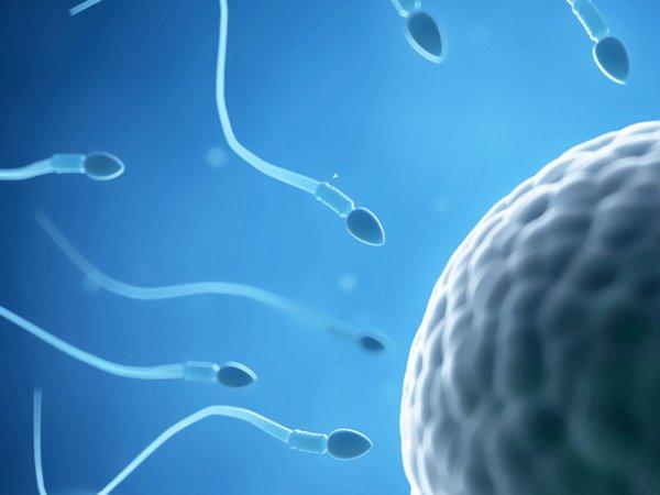 Tinh trùng loãng có con hay không?