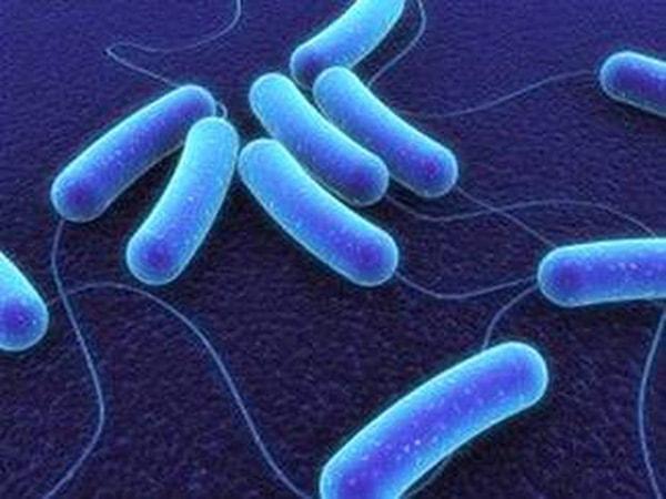 Vi khuẩn tả và ký sinh trùng gây bệnh tiêu chảy
