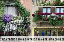 5 loại hoa trồng trong giỏ treo để trang trí ban công chung cư