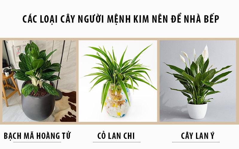 Các loại cây người mệnh Kim nên để nhà bếp