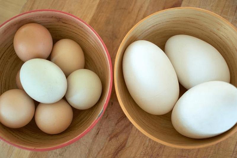 Trên thực tế, mẹ bầu nên ăn trứng ngỗng vừa đủ và nên bổ sung trứng gà hơn