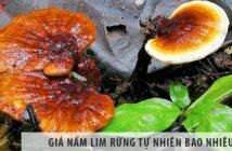 Giá nấm lim rừng tự nhiên bao nhiêu, cách dùng nấm hiệu quả?